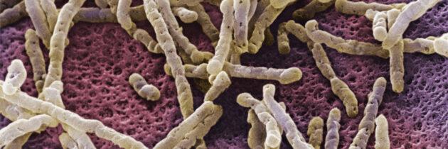Zinplava (bezlotoxumab): aprobare în UE pentru prevenirea recurenței infecției cu Clostridium difficile